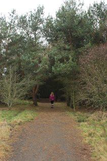 Harlaw tree arch